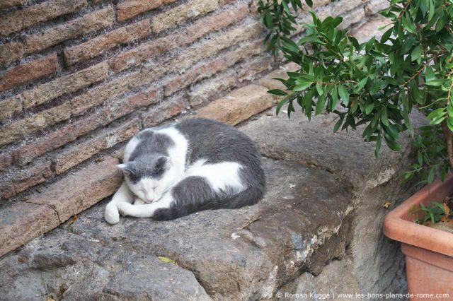 Sanctuaire des Chats Torre Argentina Rome