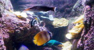 Zoos et Aquariums à Rome