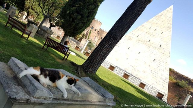 Chat du cimetière protestant non-catholique de Rome