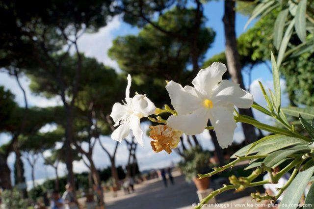 Jardin des Orangers Rome Giardino degli Aranci